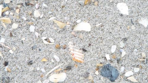 Sebastian Inlet Shells