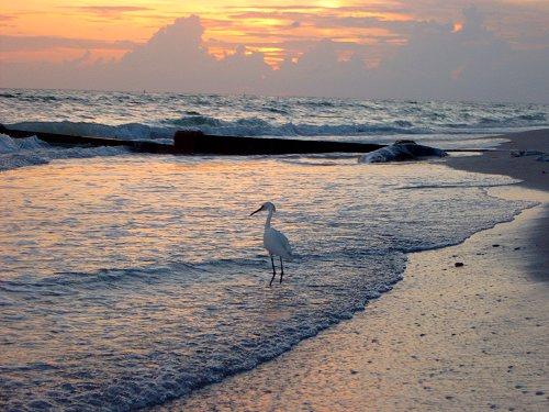 Madeira Beach Egret Sunset