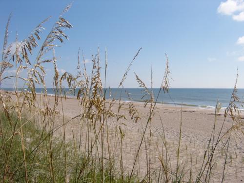 Cocoa Beach Sea Oats
